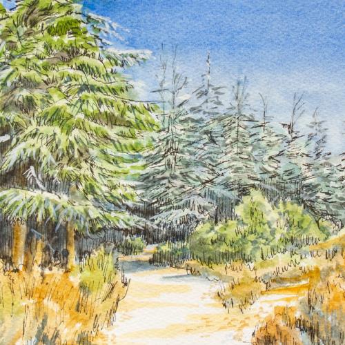 Cedar Forest - Grande Luberon 01 Thumbnail