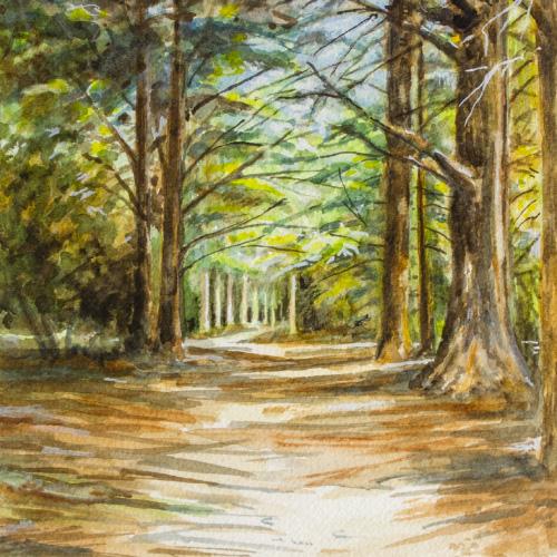 Cedar Forest - Grande Luberon 02 Thumbnail